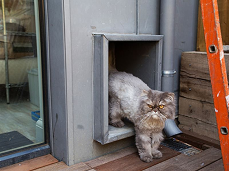 House cat at London's first certified EnerPHit Eco Home